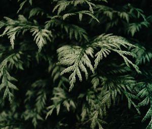 Превью обои хвоя, кусты, ветка, зеленый