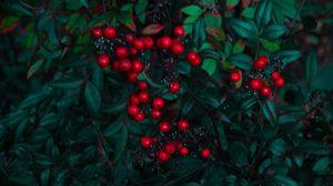 Превью обои ягода, красный, листья, ветки