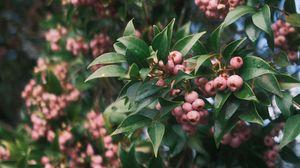 Превью обои ягода, листья, ветка, куст
