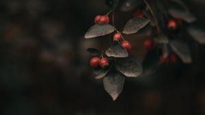 Превью обои ягода, листья, ветка, куст, фокус