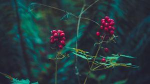 Превью обои ягода, растение, листья, ветки