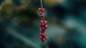 Превью обои ягода, ветка, макро, размытость