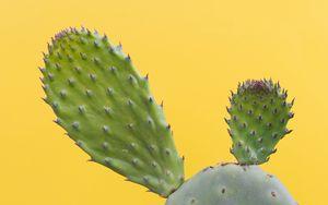 Превью обои кактус, суккулент, колючий, зеленый, минимализм