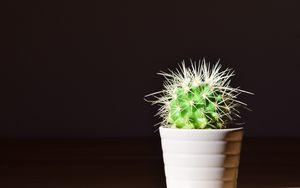 Превью обои кактус, цветок, колючки, комнатное растение