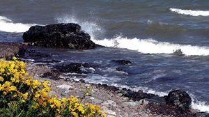 Превью обои камни, берег, брызги, волны, удар, цветы