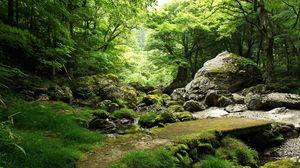Превью обои камни, трава, мох, природа, деревья