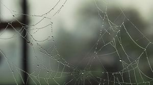 Превью обои капли, дыры, дырки, роса, макро, паутина, паутинка
