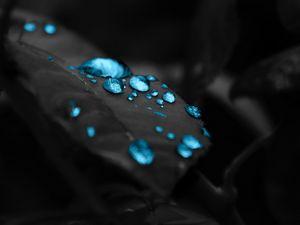 Превью обои капли, лист, фотошоп, роса