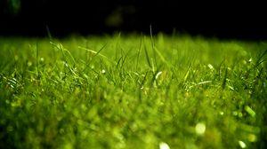 Превью обои капли, роса, трава, поверхность
