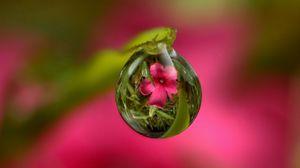 Превью обои капля, цветок, отражение, стебель