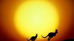 Превью обои кенгуру, австралия, закат, вечер, силуэты