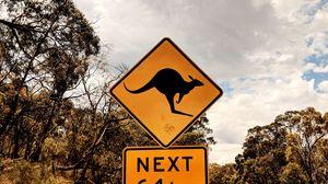 Превью обои кенгуру, знак, надпись, дорога