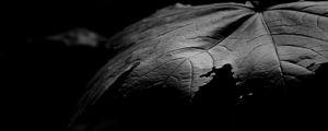 Превью обои клен, листок, макро, черно-белый, черный