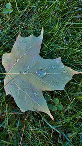 Превью обои кленовый лист, лист, капли, макро, зеленый