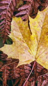 Превью обои кленовый лист, листья, осень, макро
