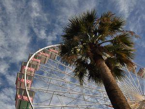 Превью обои колесо обозрения, аттракцион, пальмы, вид снизу