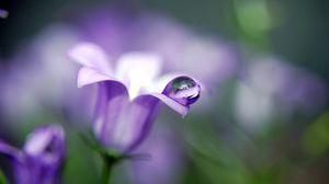 Превью обои колокольчик, растение, цветок, лепестки, капля