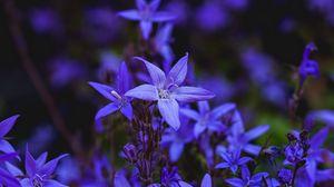 Превью обои колокольчик, цветок, цветение, голубой