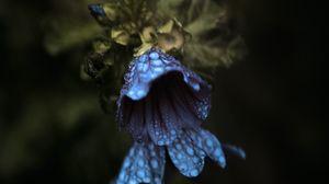 Превью обои колокольчик, цветы, капли, макро, темный