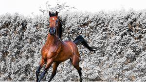 Превью обои конь, бег, лошадь, сбруя