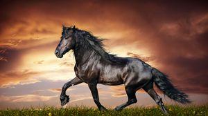 Превью обои конь, бег, закат, поле, трава, цветы, лошадь