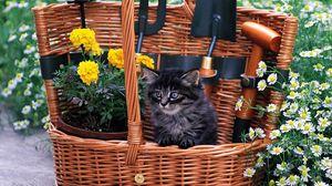Превью обои корзина, котенок, пушистый, цветы, полевые
