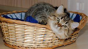Превью обои корзина, лежать, кот, игривый
