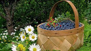 Превью обои корзина, ягода, черника, земляника, ромашки