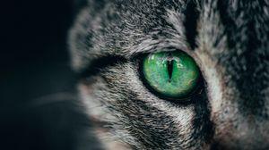 Превью обои кошка, глаз, зеленый, зрачок, крупным планом