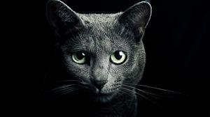 Превью обои кошка, кот, серый, порода, русская, голубая, глаза, зеленые, взгляд, черный фон