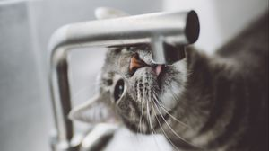 Превью обои кошка, язык, вода