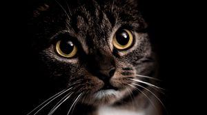 Превью обои кошка, питомец, животное, взгляд