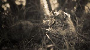 Превью обои кошка, трава, прогулка, пушистый