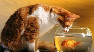 Превью обои кот, аквариум, рыба