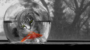 Превью обои кот, аквариум, рыбка