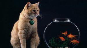 Превью обои кот, аквариум, рыбы, подвеска, сердце