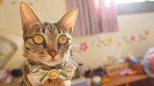 Превью обои кот, бант, морда, взгляд, полосатый, красивый, нарядный