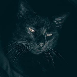 Превью обои кот, черный, морда, взгляд, сонный