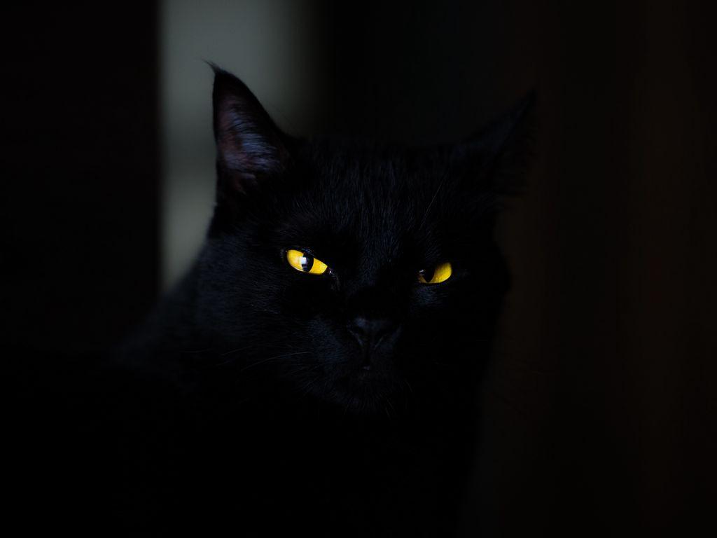 1024x768 Обои кот, глаза, черный