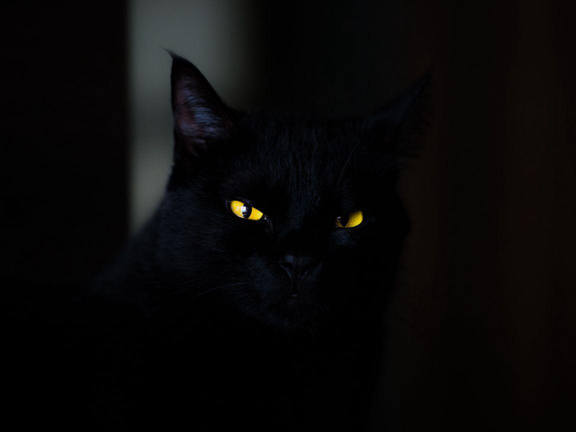 1152x864 Обои кот, глаза, черный