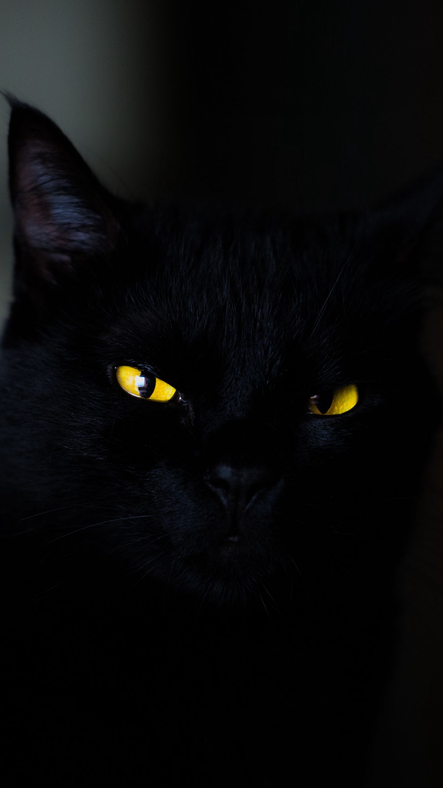 1440x2560 Обои кот, глаза, черный