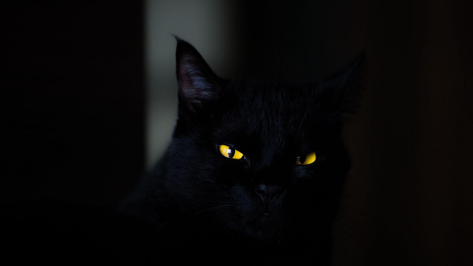 1920x1080 Обои кот, глаза, черный