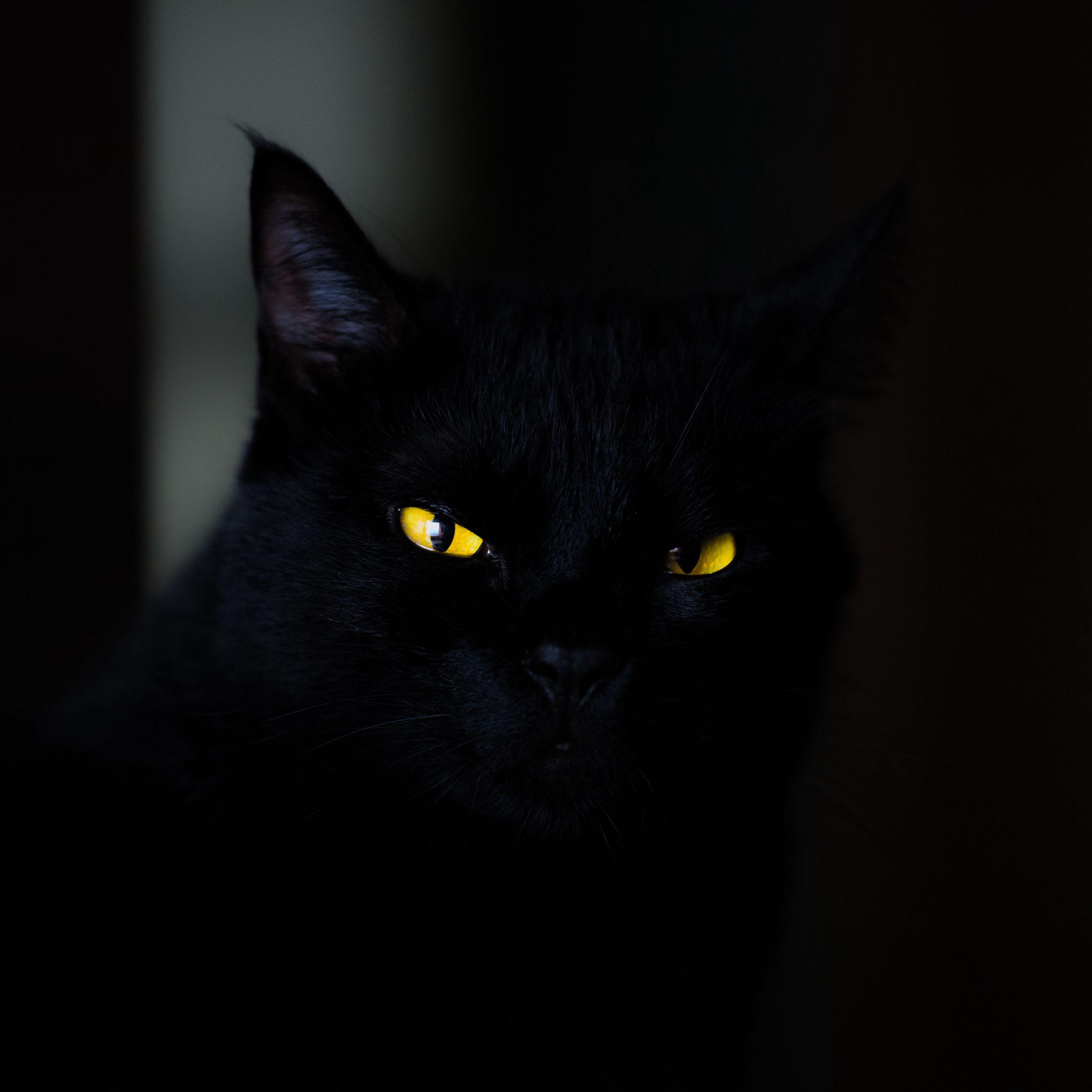 2780x2780 Обои кот, глаза, черный