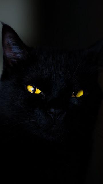 360x640 Обои кот, глаза, черный