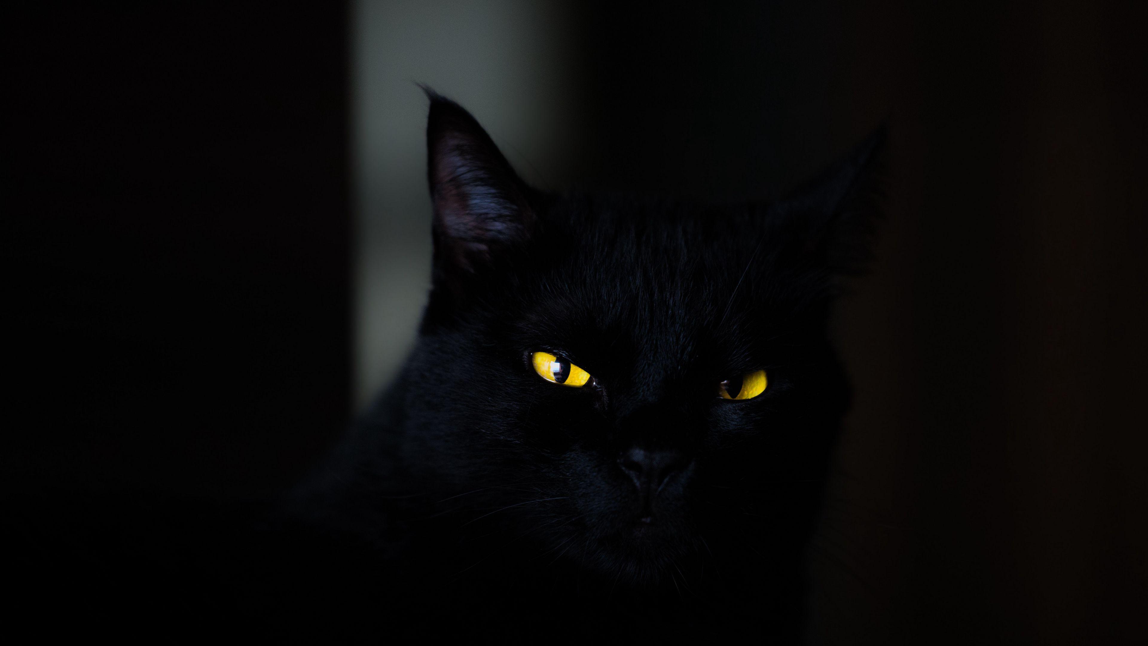 3840x2160 Обои кот, глаза, черный