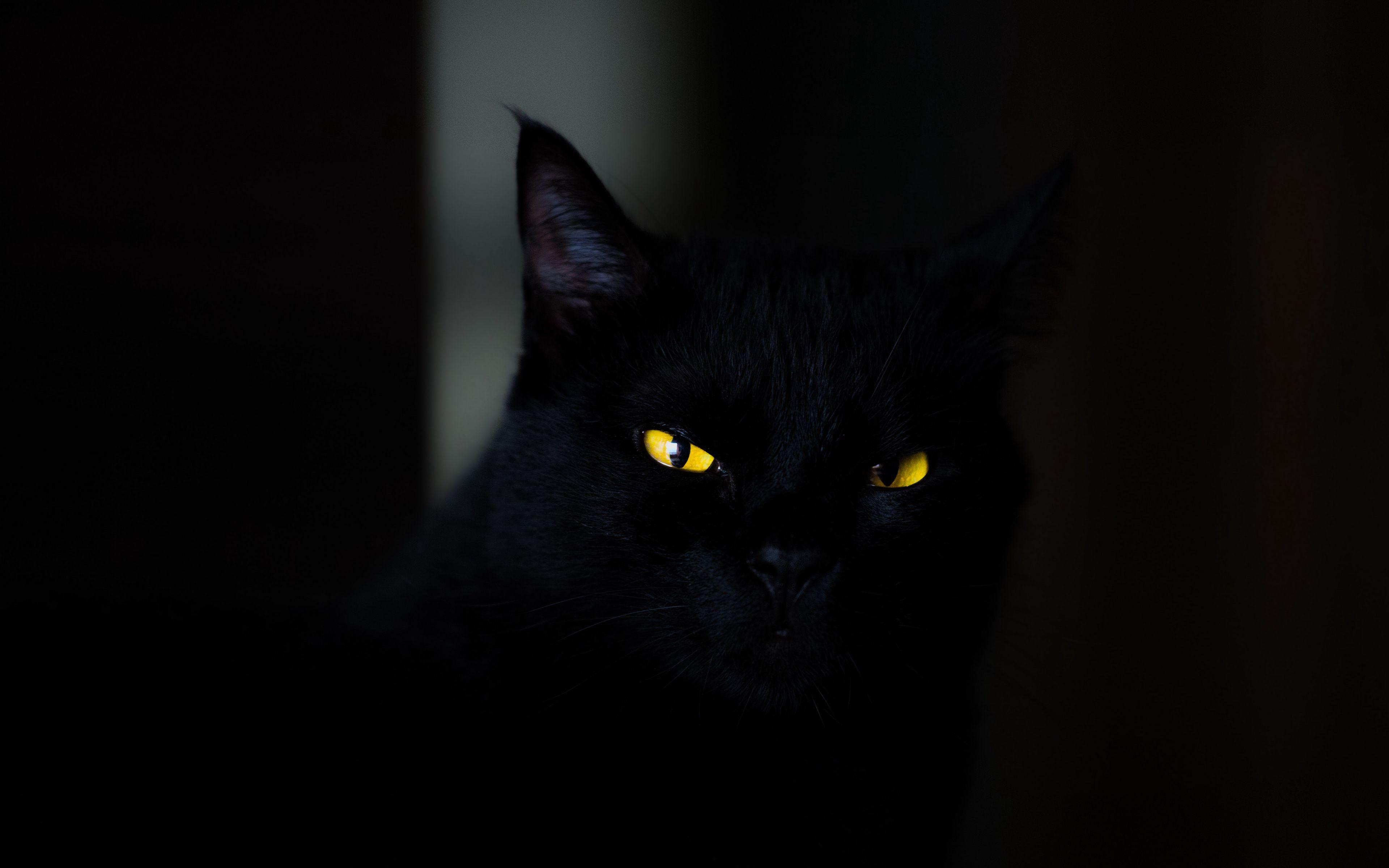 3840x2400 Обои кот, глаза, черный