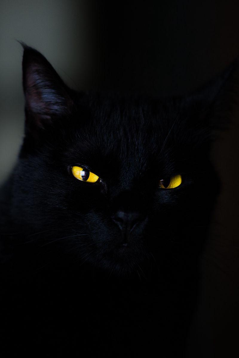 800x1200 Обои кот, глаза, черный