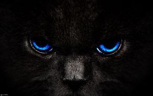 Превью обои кот, глаза, голубой, взгляд, темный