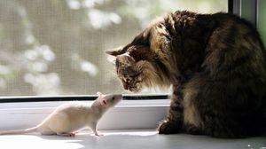Превью обои кот, крыса, окно, подоконник, знакомство