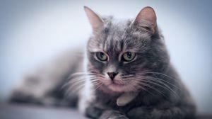 Превью обои кот, морда, усы, взгляд, размытость